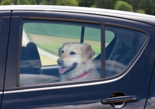 2011_0609_dog_in_car