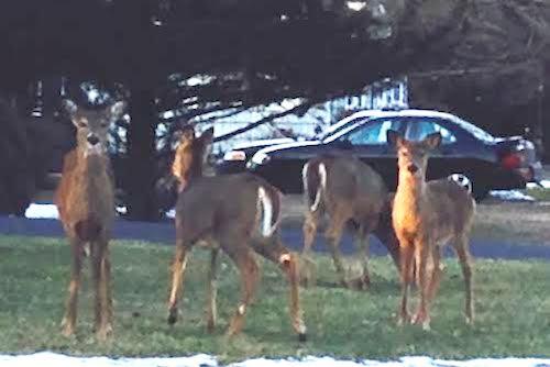 2014 0307 deer