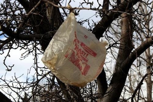 2014_1028_plastic_bag_in_tree