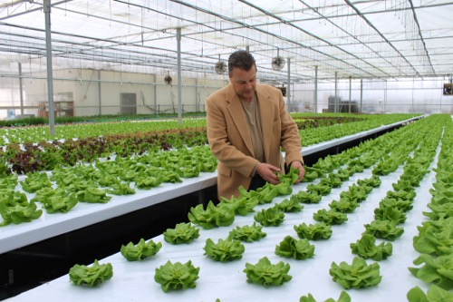 growing hydroponic vegetables for profit