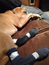 2016_1118_Nigro_dog_socks