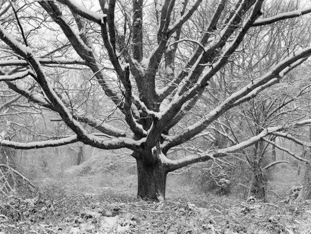 'Family Tree In Winter' by Daniel Jones.