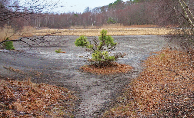 The area that will be restored at Indian Island County Park. (Credit: Barbaraellen Koch, file)