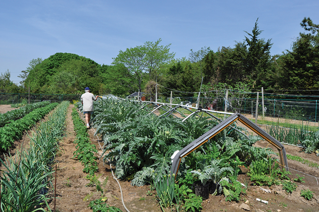 TR0630_RE_garden2_ry_C.jpg
