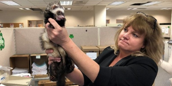 Feisty french fry-feasting ferret finds new forever home