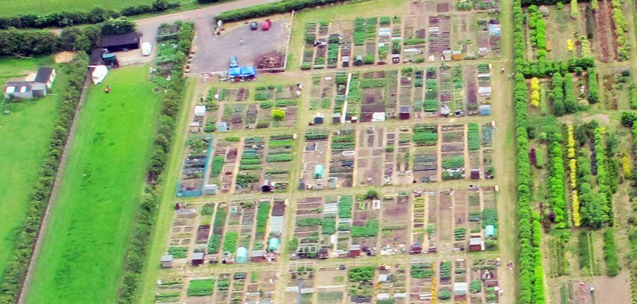 allotment gardening national allotment