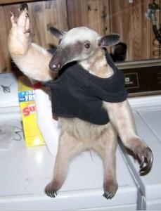 anteater-tshirt