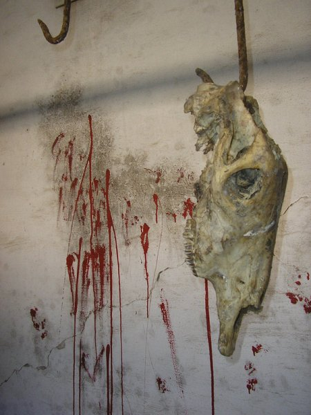 cannibal_holocaust_by_pezzente
