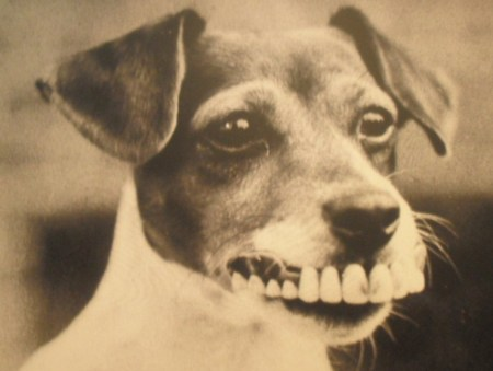 buck_teeth_dog_by_kittykitty323-d32lj3l