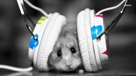 littlefriends,animal,blackandwhite,cute,funny,headphone-2cd88ce015811a3573ad77d5b871fe07_h