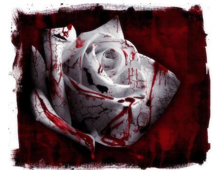 rosa_de_sangue