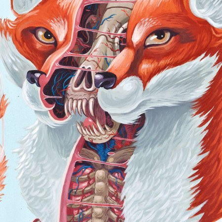 1xRUN-Nychos-Dissection-of-a-Fox-12x15-Web021