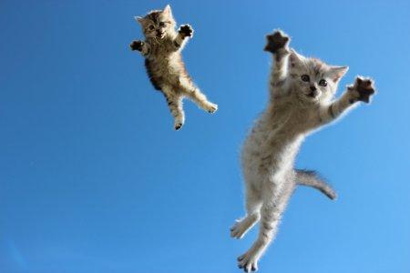 flying_cat_by_yurakaprosh-d5qqwtx