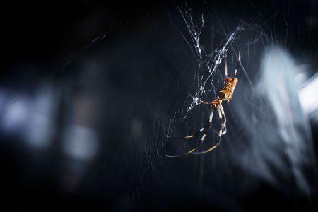 1280px-Big_Ass_Spider_(2)_(5714363127)