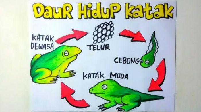 Ilustrasi proses dan urutan metamorfosis katak