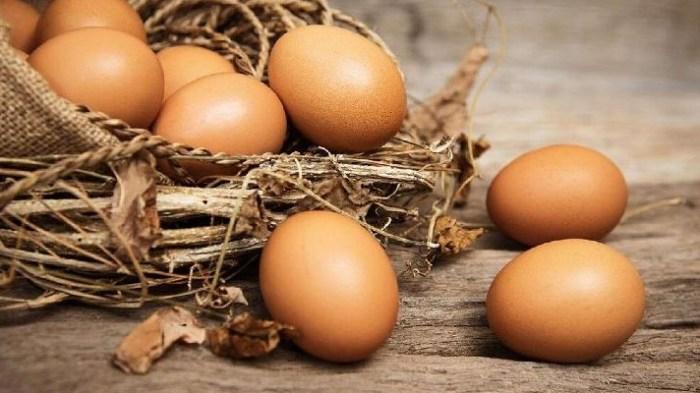 Gambar fase pertama berupa telur ayam