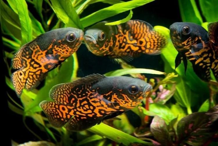 Gambar klasifikasi ikan