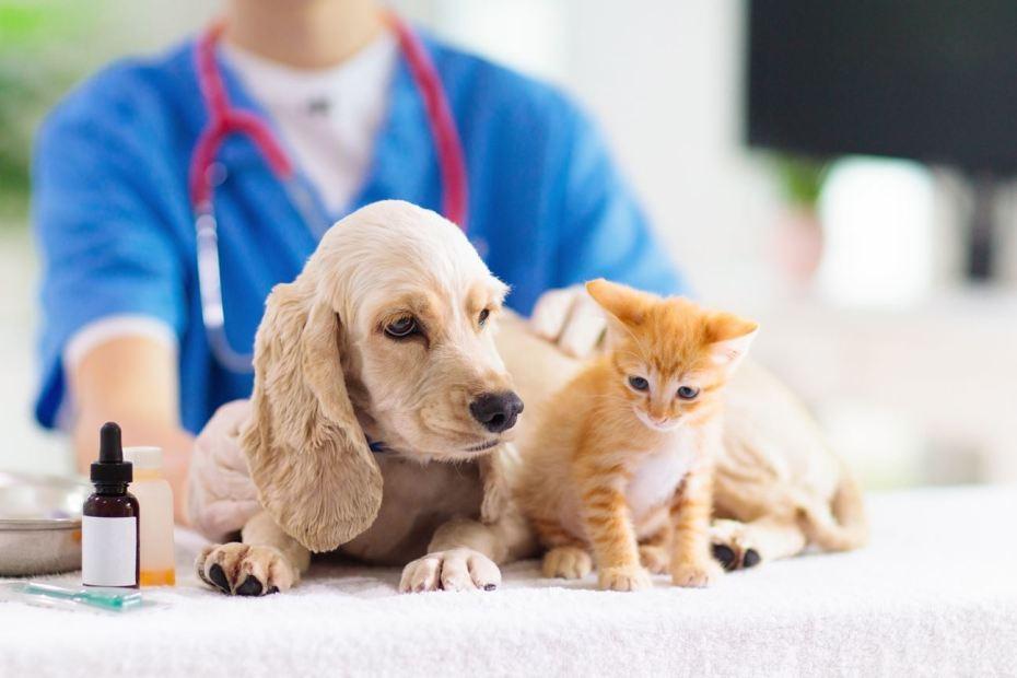 Dog vaccination price cork
