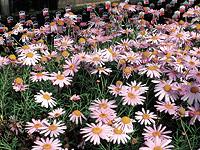 Kellnersflowers.jpg
