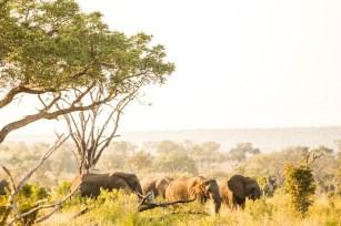 safari2-4