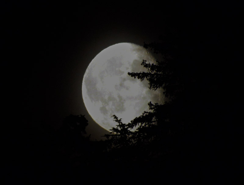 FlynnCove-moon-8395