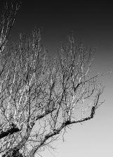 Branches (grad nd ev-2)