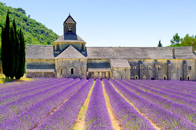 Lavander fields in Provence in the South of France