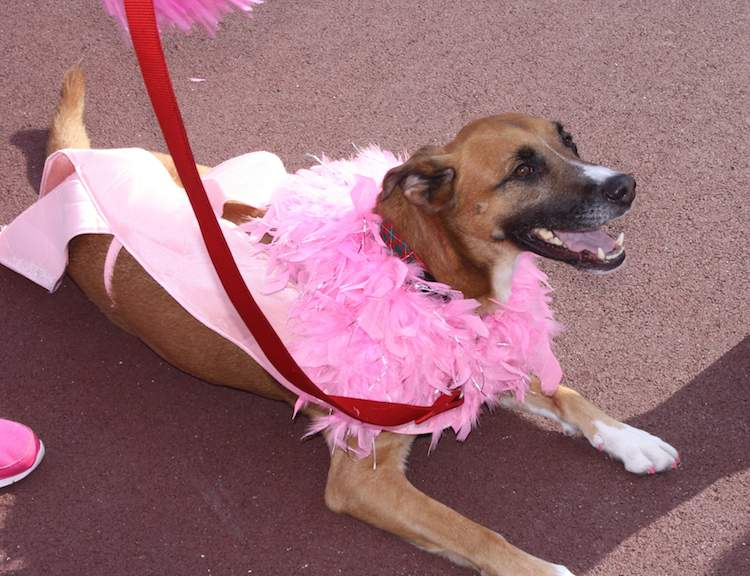 Pink Ribbon Monaco Walk 2016