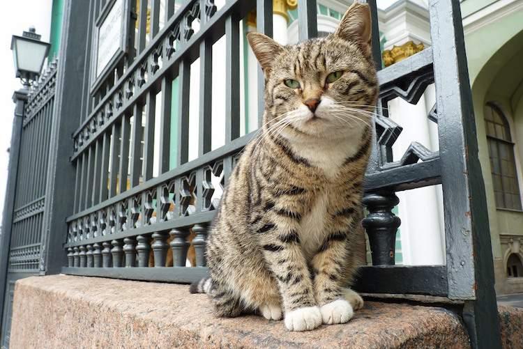 Cat at Hermitage in St Petersburg