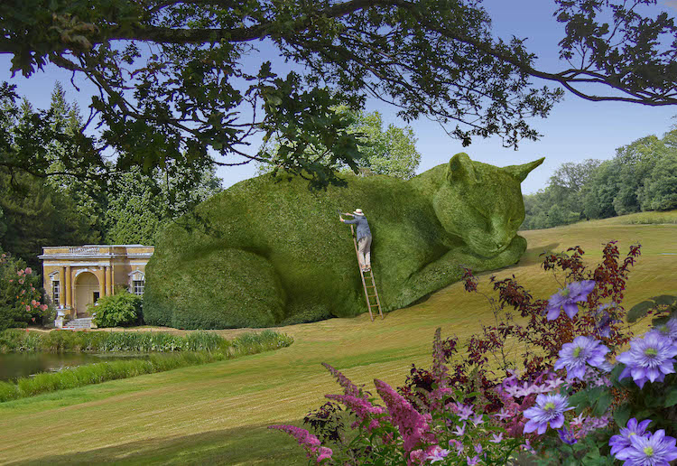 Topiary Cat Maintenance