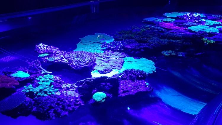 Coral expo Monaco