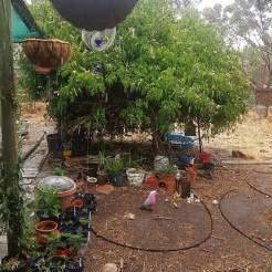 Carmen - South Australia
