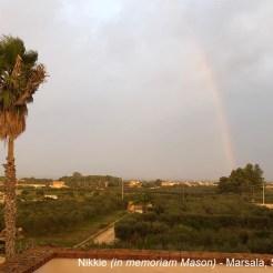 Nikkie (in memoriam Mason) - Marsala Sicily