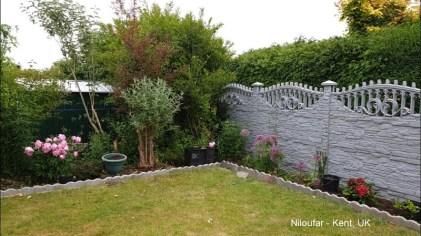 Niloufar - Kent UK
