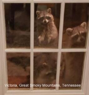 Victoria Great Smoky Mountains TN