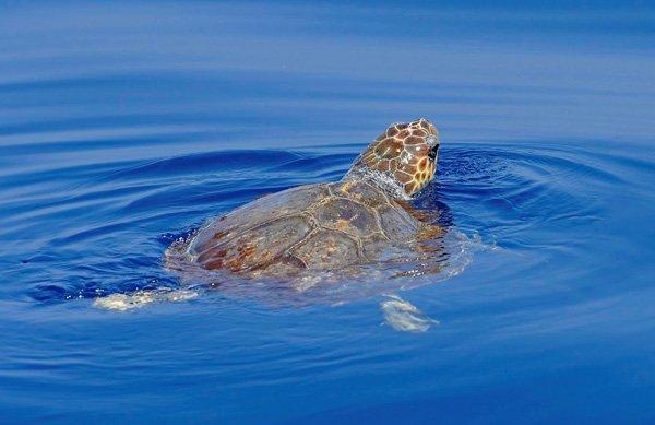Whale watchingcon tutta la famiglia con una tartaruga
