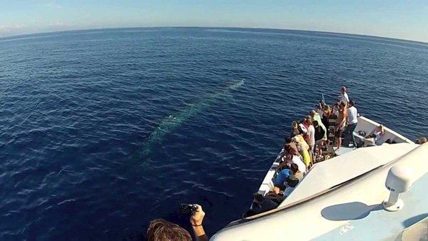 Whale watching alla scoperta dei cetacei con tutta la famiglia in barca