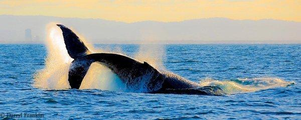 Whale watching alla scoperta dei cetacei con tutta la famiglia