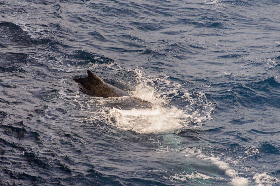 whale-watching-liguria
