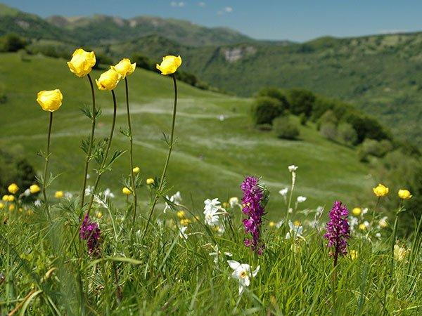 Parco dell'Antola passeggiata tra i prati in fiore