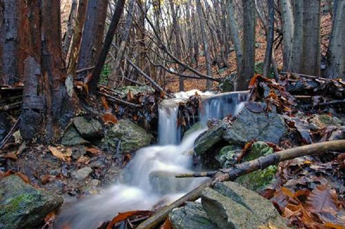 Bosco dell'Adelasia gita fuori porta tra la biodiversità