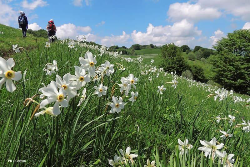 Parco dell'Antola passeggiatatra la fioritura dei prati