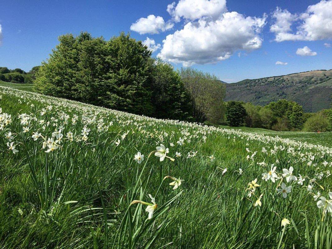 Parco dell'Antola con prati in fiore