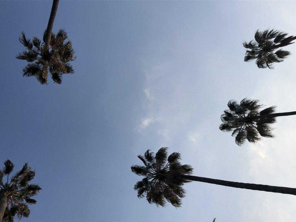 Sanremo palme con cielo azzurro sullo sfondo