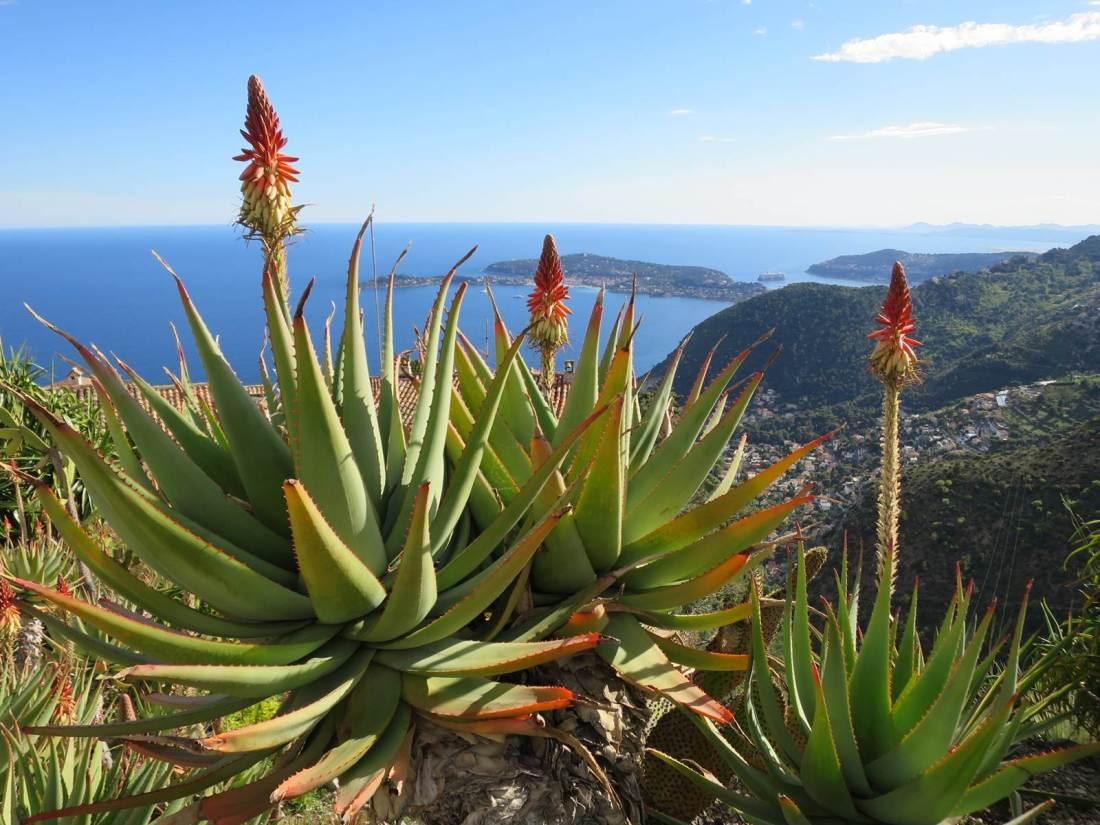 Costa Azzurra e gita nel giardino Ezè con vista sul mare