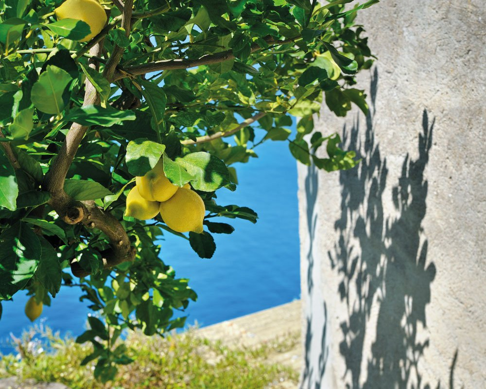 Limoni - Liguria vista mare