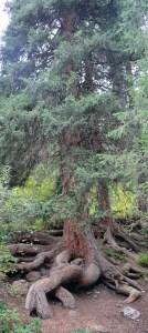 Rivier Boom Berg & Meer - staan als een boom