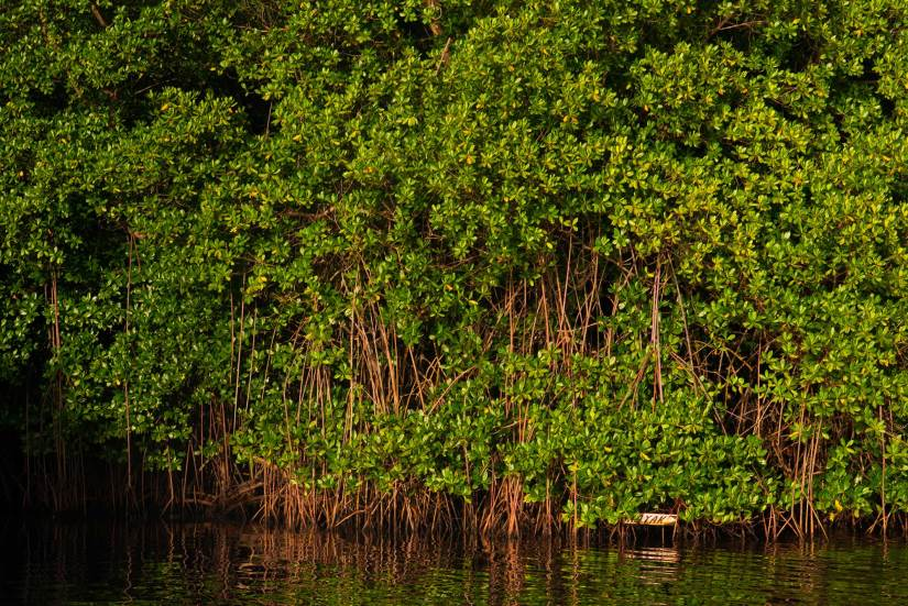 Rivière-Salée - Commune de Martinique - mangrove