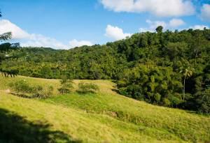Les champs, mornes et plaines de Rivière-Salée