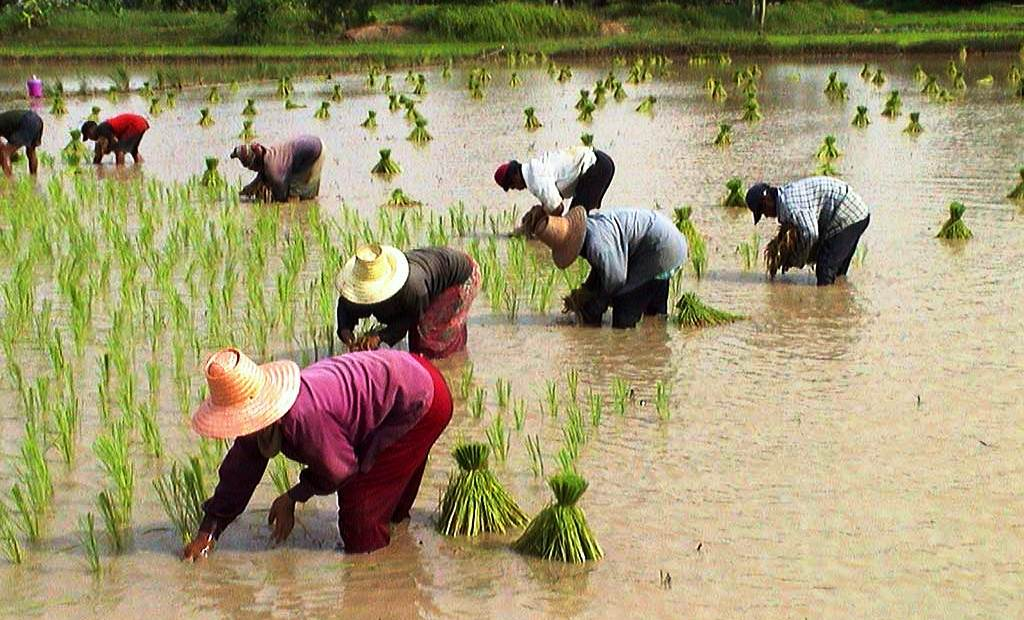 """Thailandia. Uno sguardo all'economia del """"Paese gentile"""""""